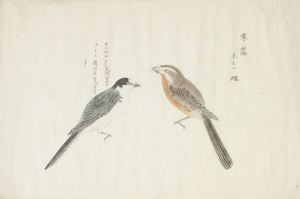 Image of Two Birds