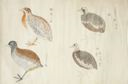 Image of Four Birds