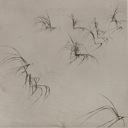 Image of Study of Beach Grasses
