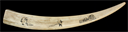 Image of Walrus Tusk with Inlaid Design