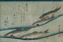 Image of River Trout (Ai or Ayu), from an untitled series known as Large Fish