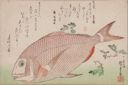 Image of Sea Bream and Sansho Pepper, from an untitled series known as Large Fish