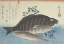 Image of Striped Sea Bream, Rock-trout, and Nandina, from an untitled series known as Large Fish