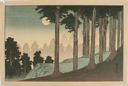 Image of Moonlit View of Pine Forest
