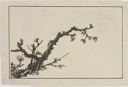 Image of Blossing Plum-Branch Across a Full Moon, from The Picture Book of Realistic Paintings of Hokusai (Shashin Gwafu)