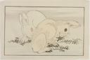 Image of Two Rabbits, from The Picture Book of Realistic Paintings of Hokusai (Hokusai shashin gafu)