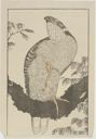 Image of Bird of Prey, from The Picture Book of Realistic Paintings of Hokusai (Shashin Gwafu)