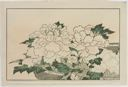 Image of Chrysanthemums in a Basket, from The Picture Book of Realistic Paintings of Hokusai (Hokusai shashin gafu)