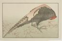 Image of Pheasant, from The Picture Book of Realistic Paintings of Hokusai (Hokusai shashin gafu)